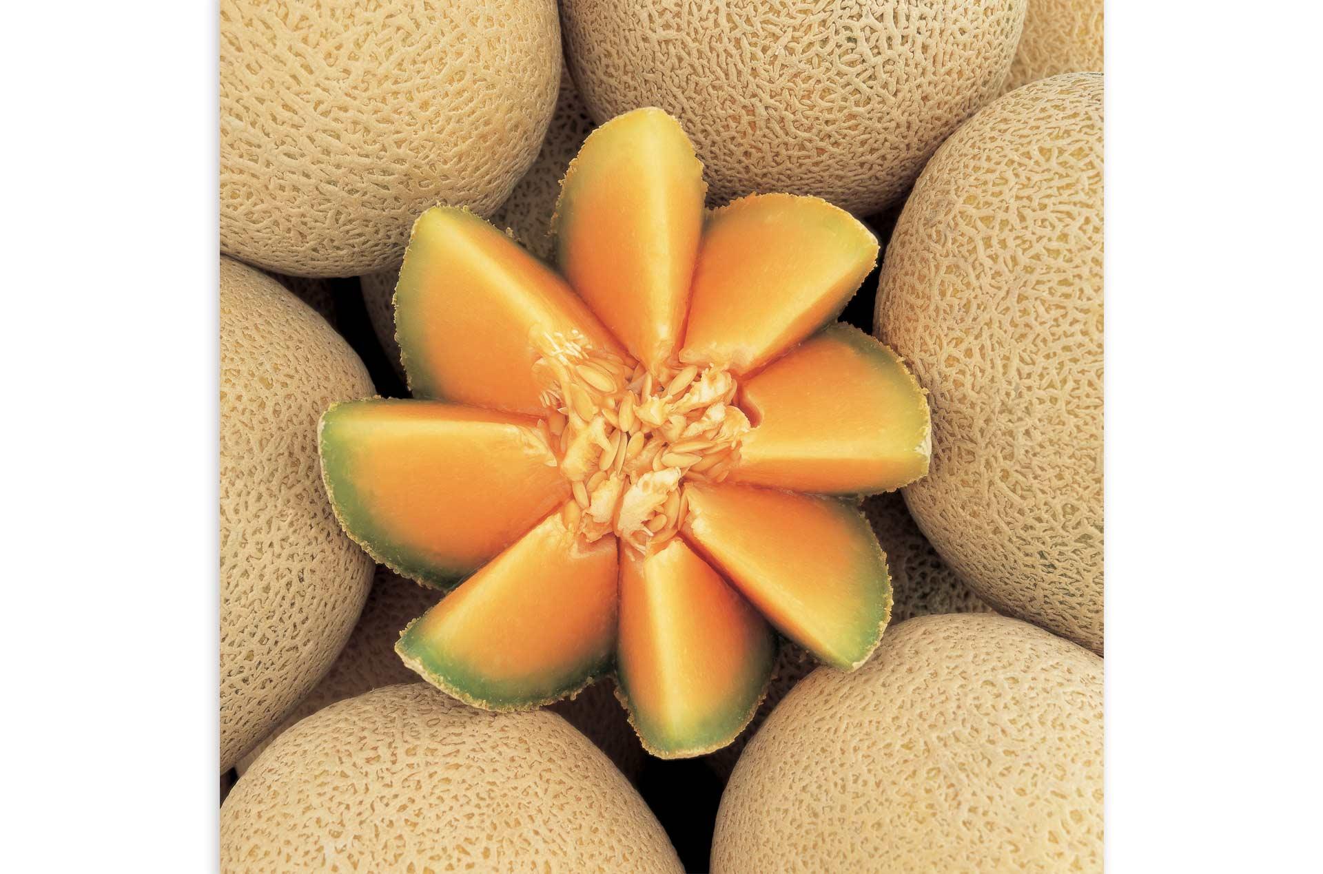 melon02